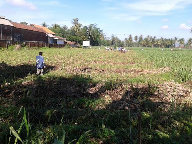 Hukum Membangun Rumah dari Kayu Ilegal