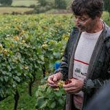 Petites vendanges 2017 du chardonnay gelé. guimbelot.com - 2017-09-30%2Bvendanges%2BGuimbelot%2Bchardonay-106.jpg