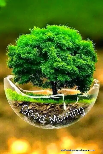 Good Morning Wording Wishes Lovely Pics