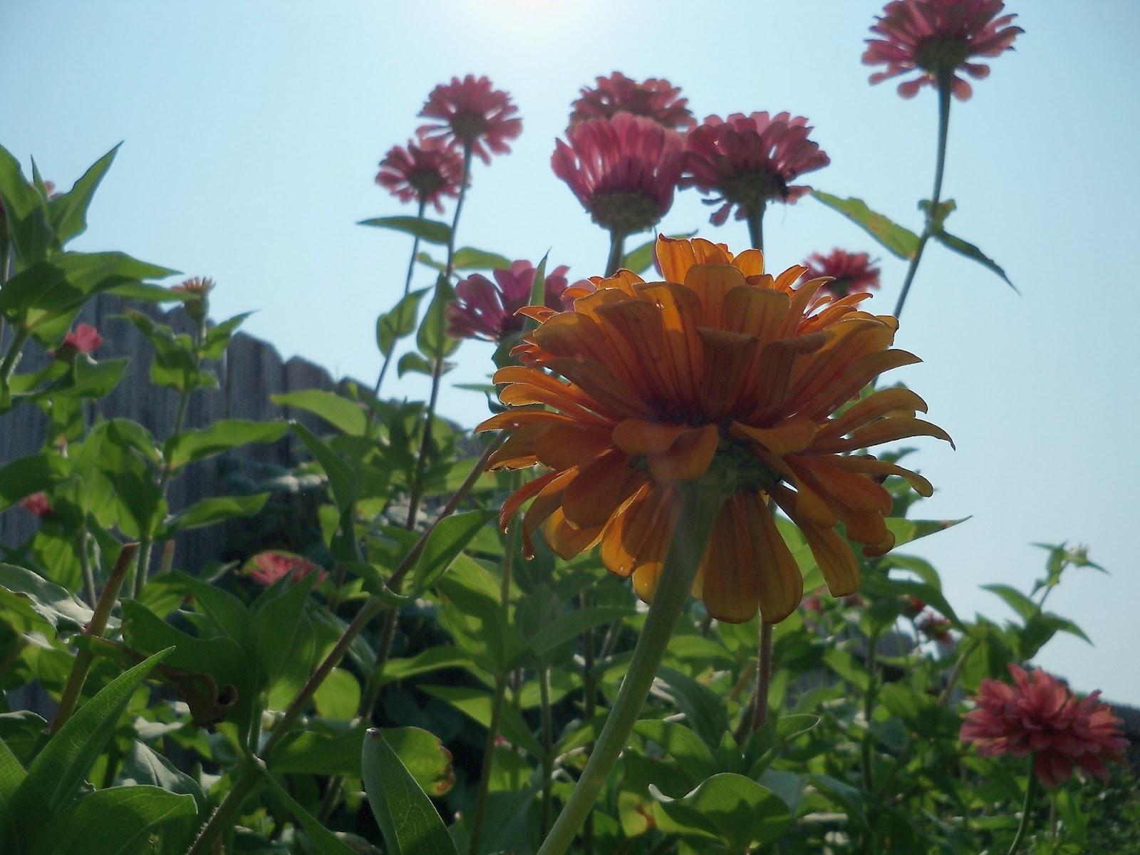 Gardening 2011 - 100_9357.JPG