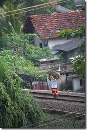 Ланка (277)