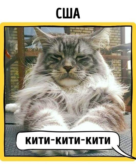 1470570035_kak-zovut-koshek-v-raznyh-stranah-mira-2