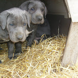 Star & True Blues February 21, 2008 Litter - HPIM1104.JPG
