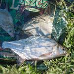 20160526_Fishing_BasivKut_013.jpg