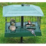 Защита кормушек для маленьких птичек от больших птиц и белок