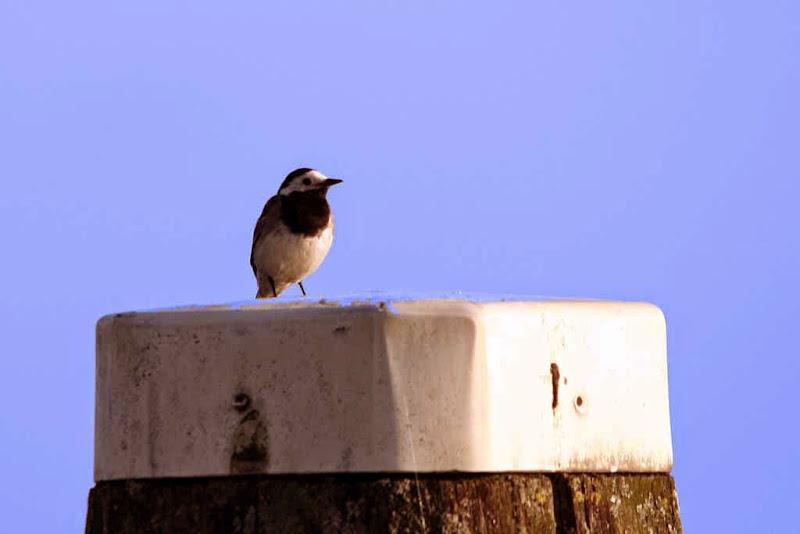 Vogels en dieren - IMG_9321.JPG