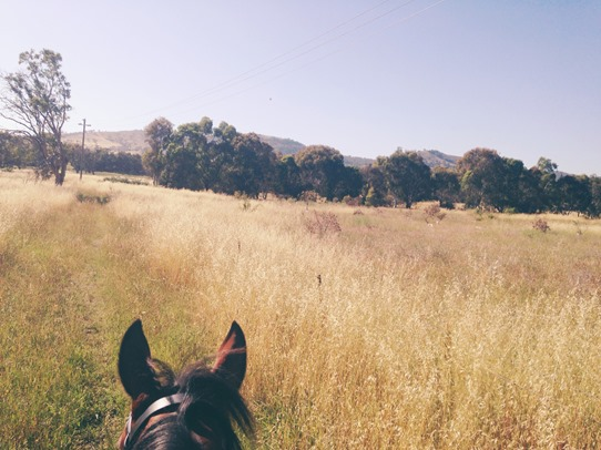 New adventures, here we come! | A Riding Habit