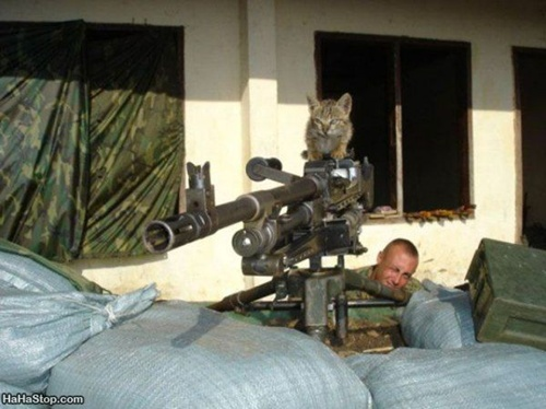 Photo of a cat manning a machine gun in a front yard