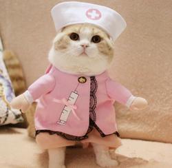 Có nên mặc quần áo cho chó mèo? Chó mèo có thích được mặc đồ?