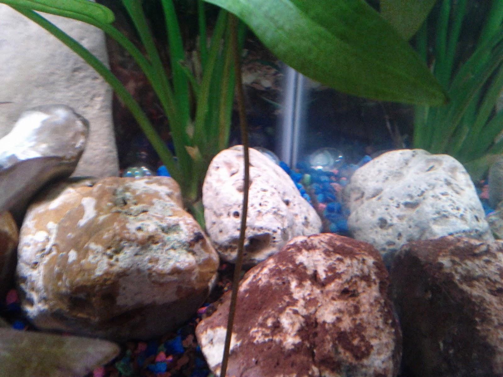 Fish - IMG_20121230_163428.jpg