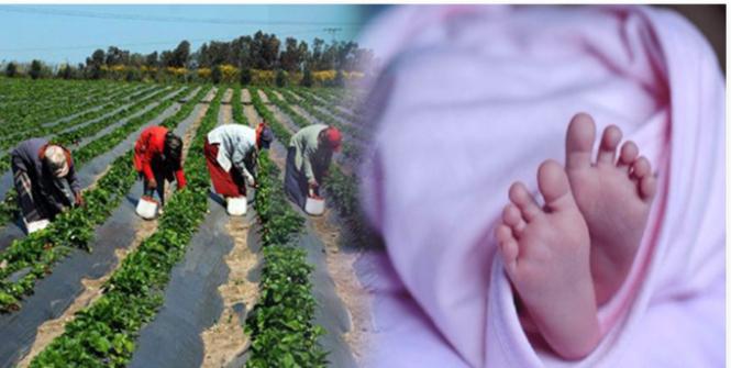 كانت بصدد جني الطماطم عندما فاجأها المخاض: امرأة تضع مولودها في الحقل..