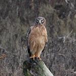 2013_01_10_Delta_Birds_of_Prey