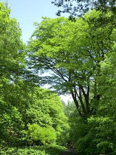 CIMG6935 Spring in Banstead Wood