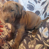 Tolly Boy @ 5 weeks