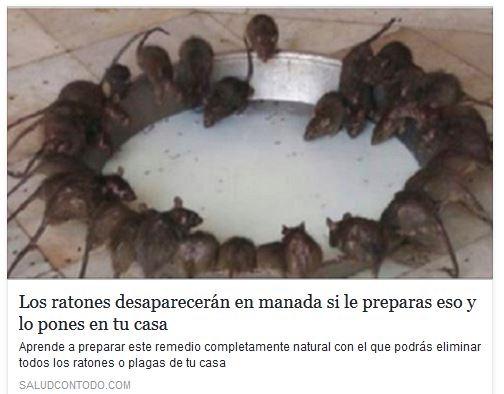 ratones 22