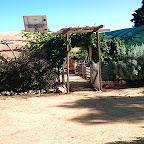 Vegi garden.JPG