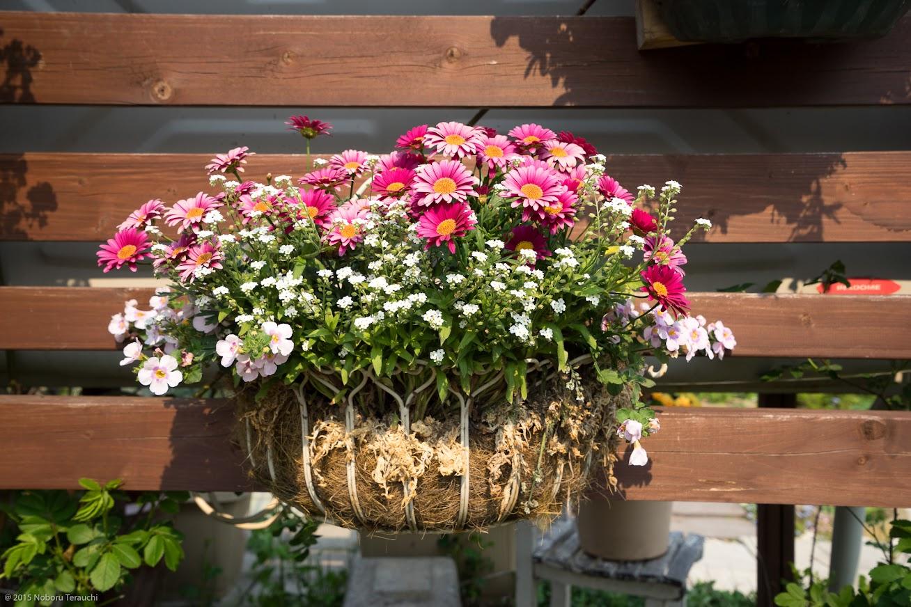 佐野町長のご自宅を飾る花たち