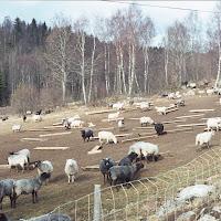Kommun_1973_090