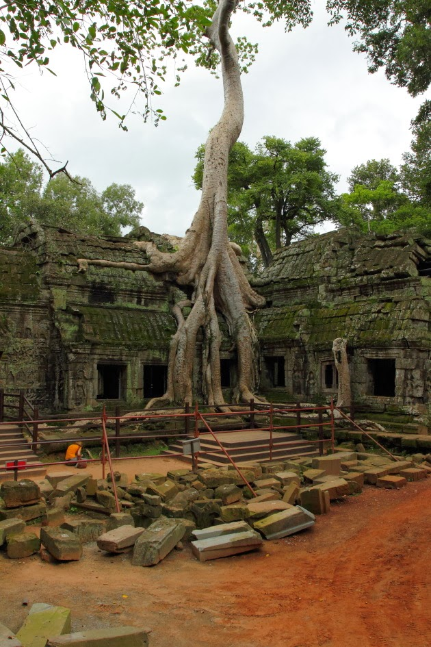 Ta Prohm - the jungle temple of Siem Reap, Cambodia
