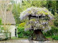 10 Ide Pemanfaatan Batang Pohon Untuk Menghias Taman Anda