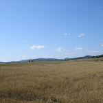 Sedlická brázda (8) (800x600).jpg