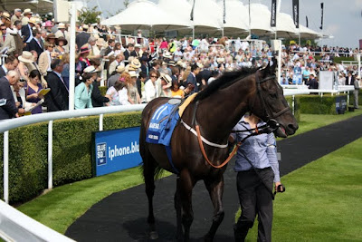 A horse walks around Glorious Goodwood's parade ring in England
