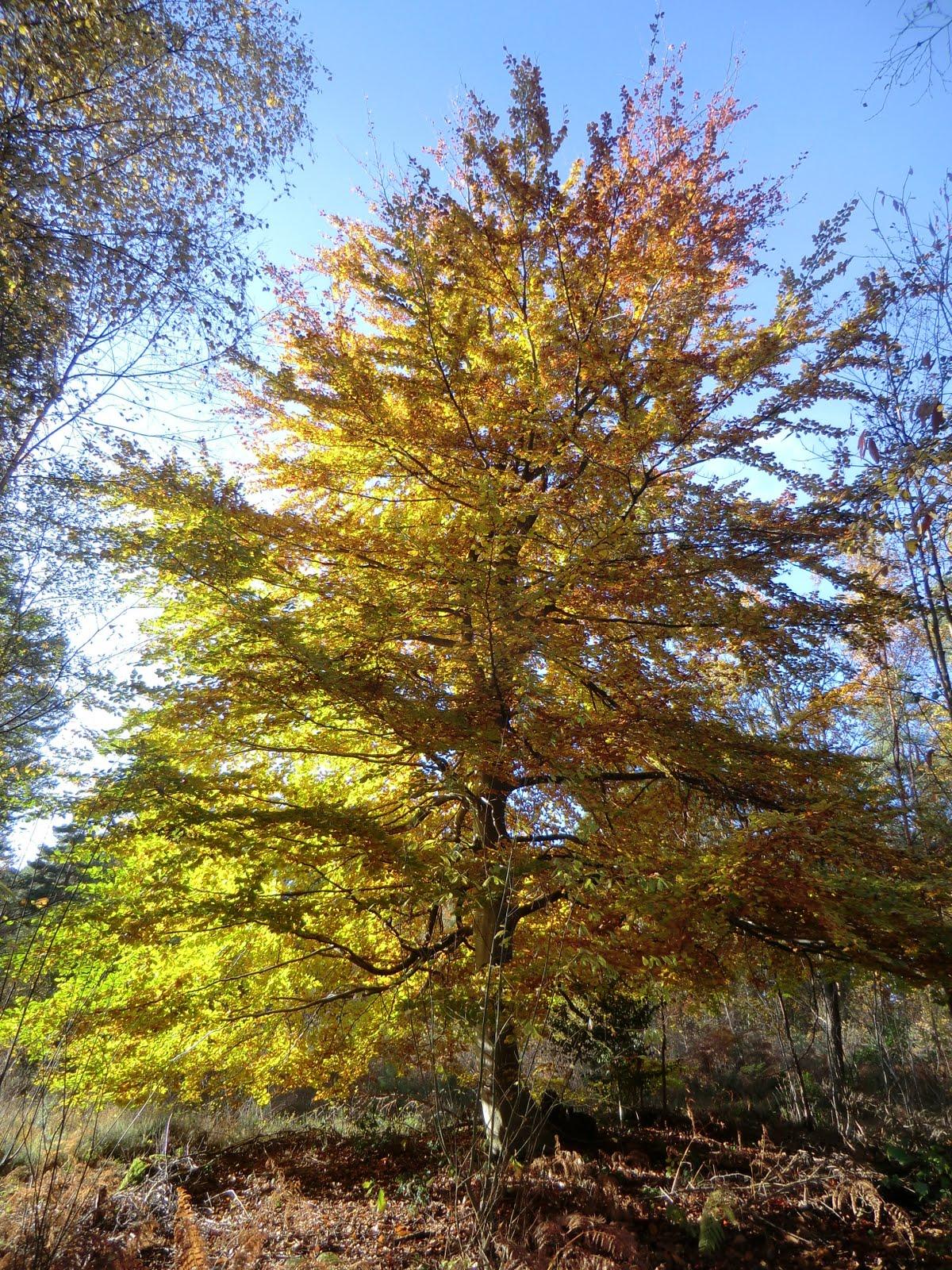 CIMG4928 Autumn colours near Heath Pond