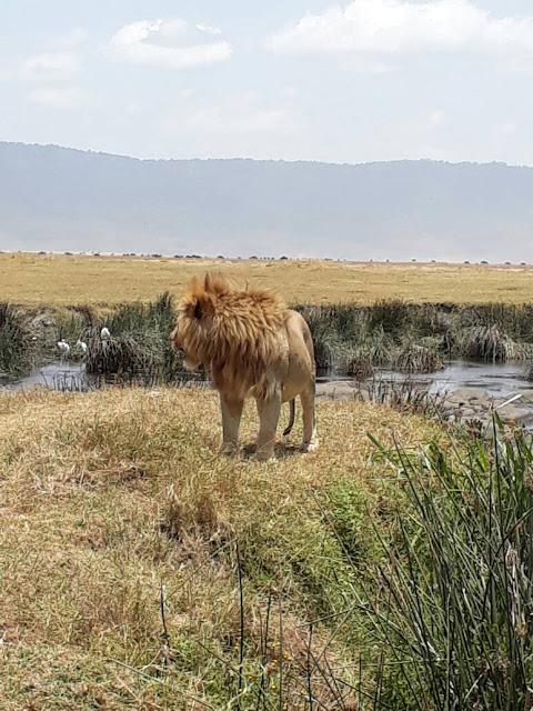 Ngorongoro Crater Tanzania Tembea Tanzania