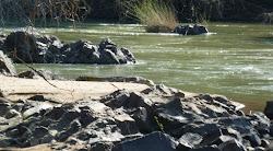 Crocodile au bord de la Kunene River
