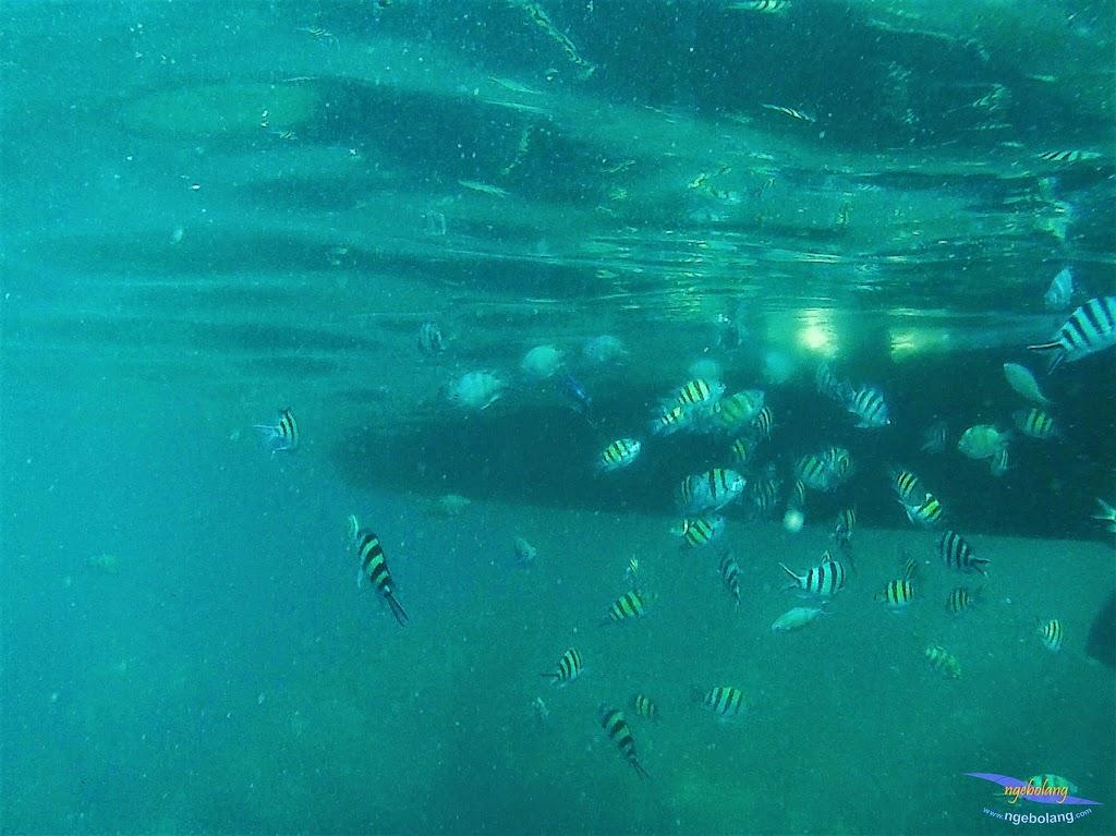 Pulau Harapan, 23-24 Mei 2015 GoPro 05