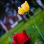 Spring (21 of 25).jpg
