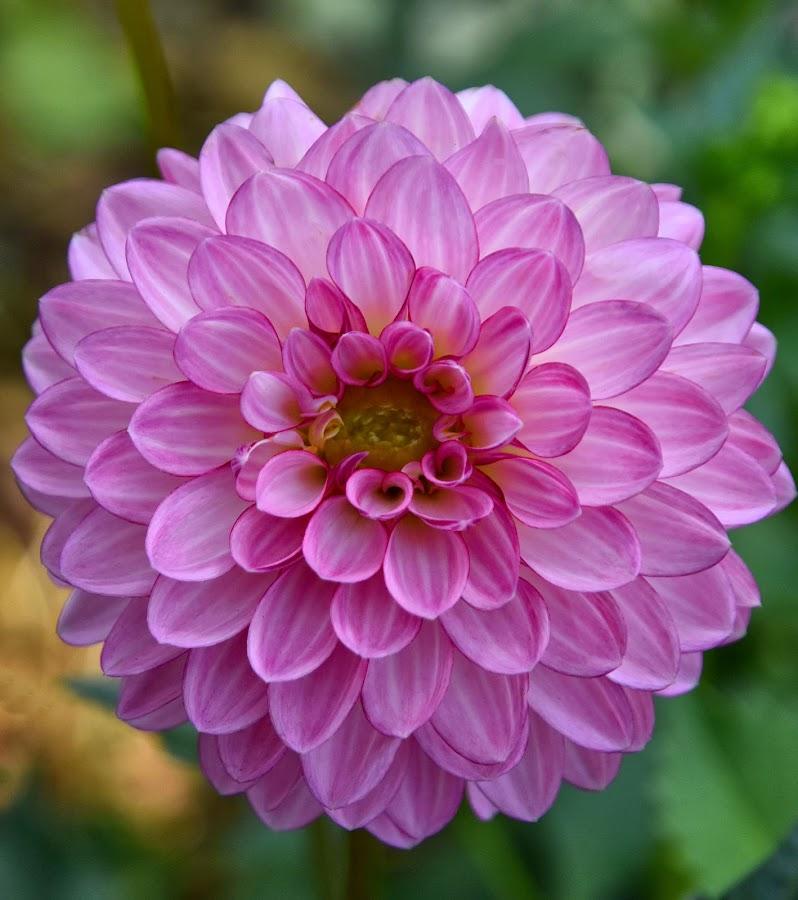 by Heather Aplin - Flowers Flower Gardens (  )
