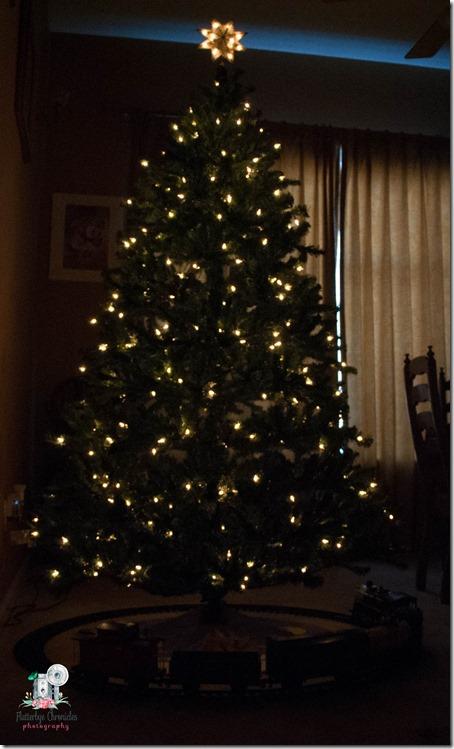 Christmas trees-4