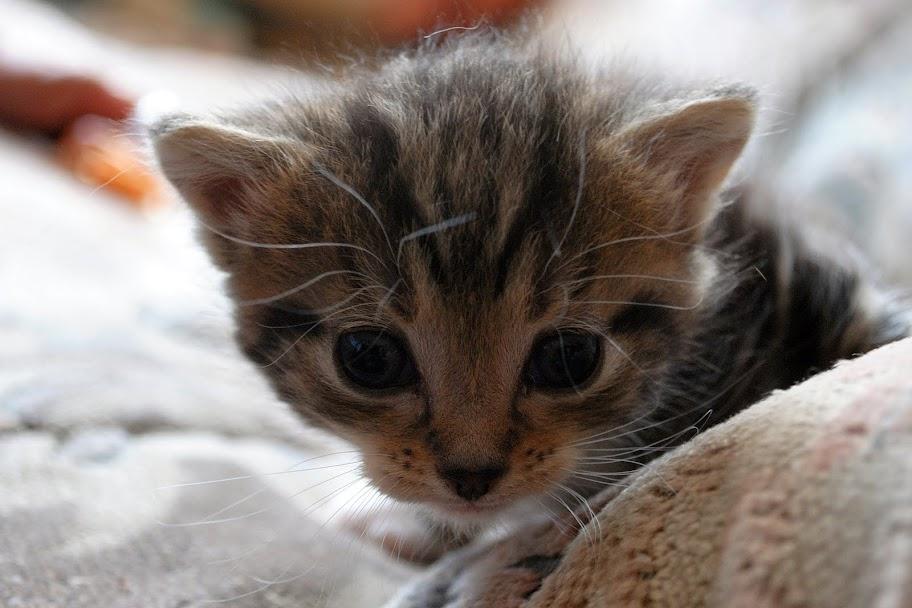 Wir suchen ein neues Zuhause (Katzen) DSC_0017