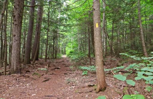HikingTableMountain-3-2015-07-30-20-13.jpg