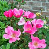 Gardening 2014 - 116_1508.JPG