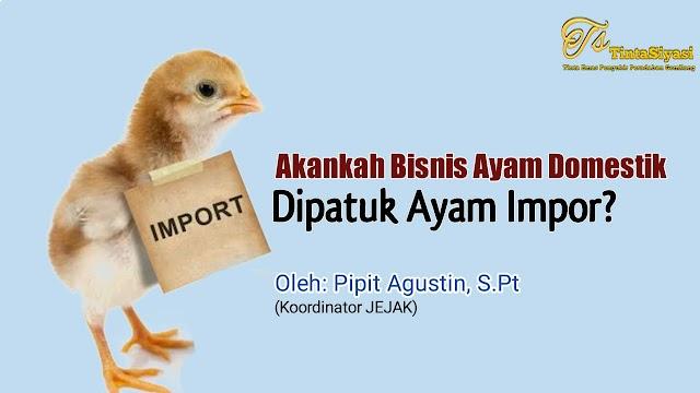 Akankah Bisnis Ayam Domestik 'Dipatuk' Ayam Impor?