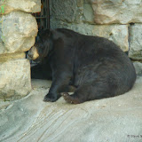 Pittsburgh Zoo Revisited - DSC05200.JPG