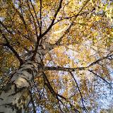 jesień na wybrane