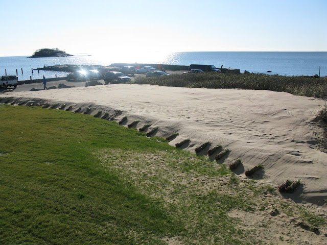Bundles of beachgrass ready for planting