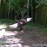 04-07-12 Homosassa Springs State Park - IMGP4576.JPG
