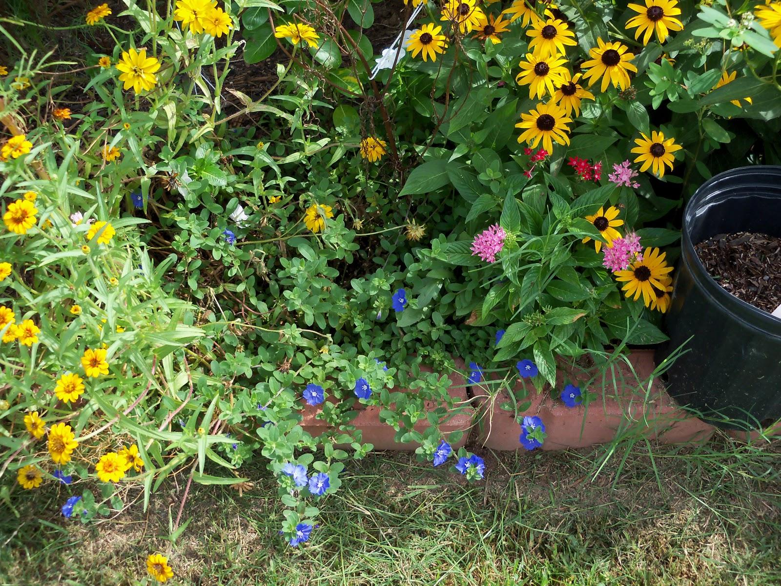 Gardening 2010, Part Three - 101_5202.JPG