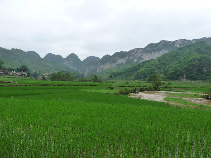 Chine . Yunnan BA MEI 2 - P1260991.JPG