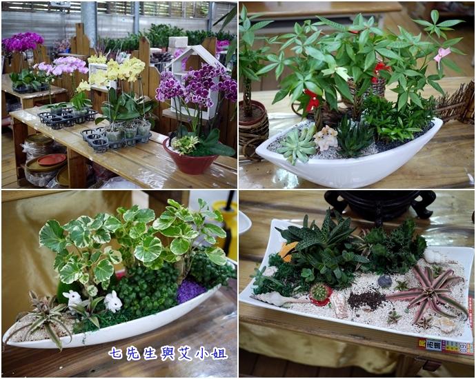 7 金羽庭花卉農場