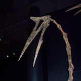 Houston Museum of Natural Science - 116_2662.JPG
