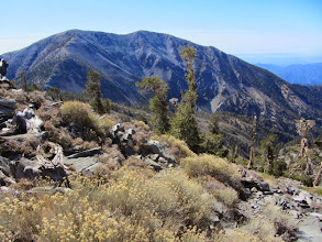 Photo: View south from the summit of Pine Mt. (9648') toward Mt. Baldy (10,046')