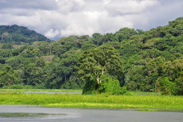 Le rio Chagres, près de Gamboa, et le Soberania National Park (Canal Zone, Panamá), 1er novembre 2014. Photo : J.-M. Gayman