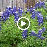 Gardening 2012 - S-Nv_M4o15BBqImEA6rYNjXMH5-PeXMhlNlmVt2Ggk_ElakZm-yX4mWEC6to66kX2Efnym18YvE=m18