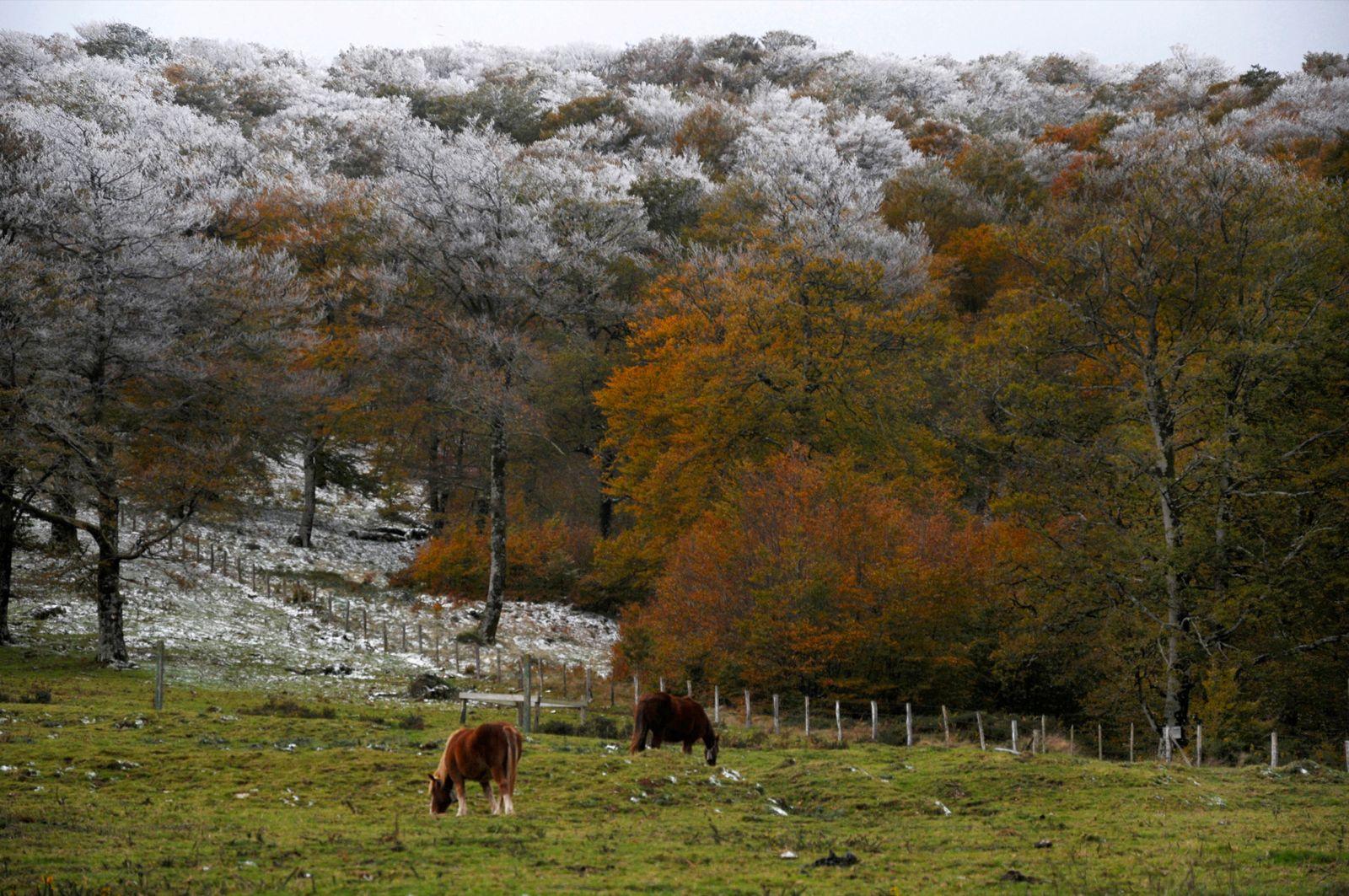caballos en la selva de Irati por Joan