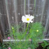Gardening 2010, Part Two - 101_2907.JPG